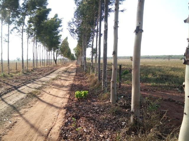 Fazenda 900 hectares - Foto 2
