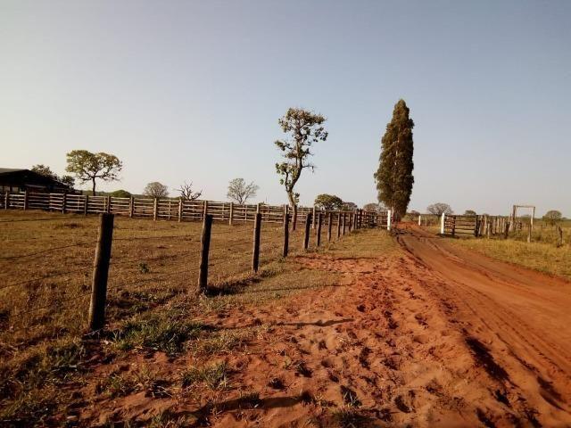 Fazenda 900 hectares - Foto 3