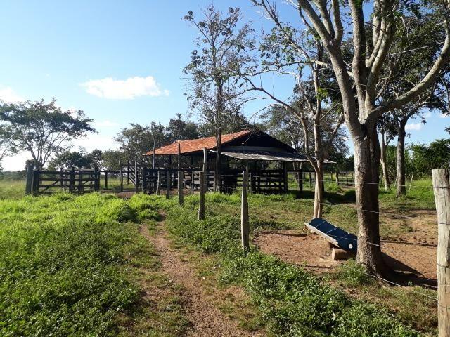 Chácara com caneiros, aves, tanque com peixes na BR 364 ha 30 km de Várzea Grande