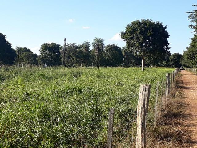 Chácara com caneiros, aves, tanque com peixes na BR 364 ha 30 km de Várzea Grande - Foto 10