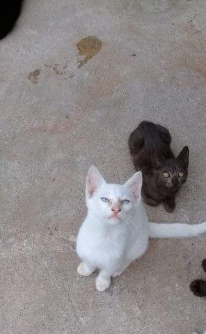 Doação de gatos - Foto 4