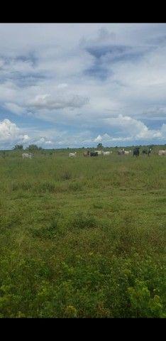 VENDA | Fazenda, em ZONA RURAL, Alto Boa Vista - Foto 3