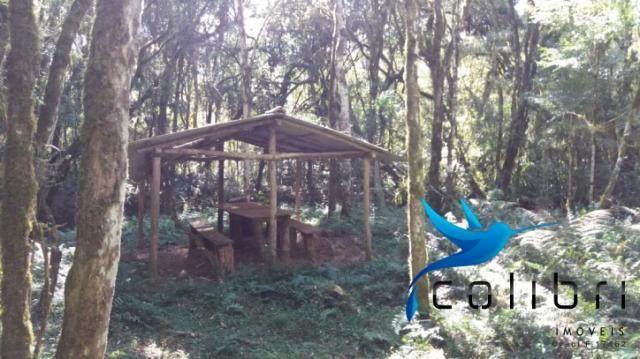 Terreno para formar chácara de lazer em Agudos do Sul - PR - Foto 14
