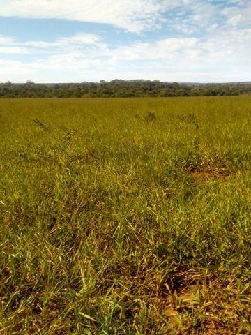 Terra para lavoura 30 km de Campo Grande - Foto 4