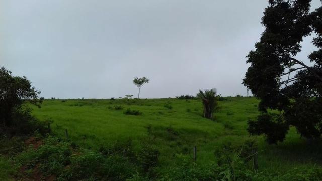 Fazenda em Porto Acre 35 km de Rio Branco - Foto 5