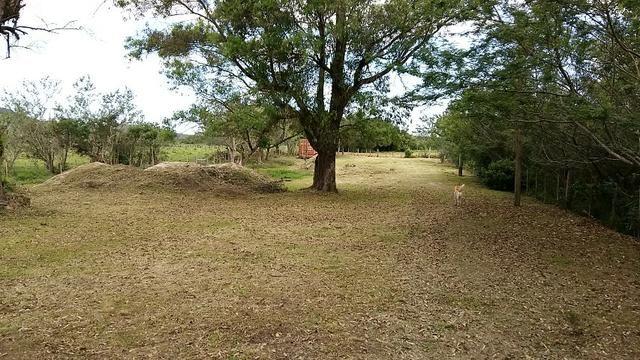 Sítio 2,9hec, no asfalto Lami POA/Itapuã, junto à rotatória, ótimo ponto comercial - Foto 12