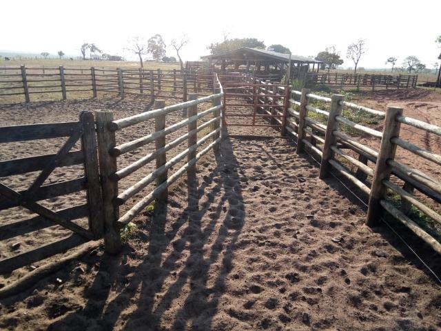 Fazenda 900 hectares - Foto 5