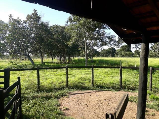 Chácara com caneiros, aves, tanque com peixes na BR 364 ha 30 km de Várzea Grande - Foto 19
