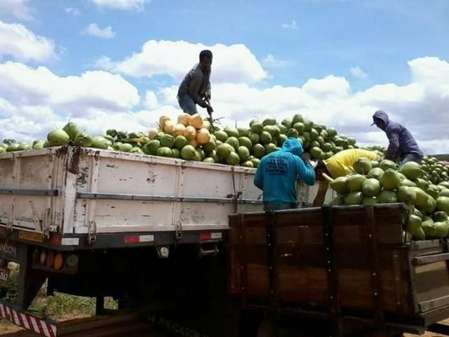 Coco verde carga direto do nordeste