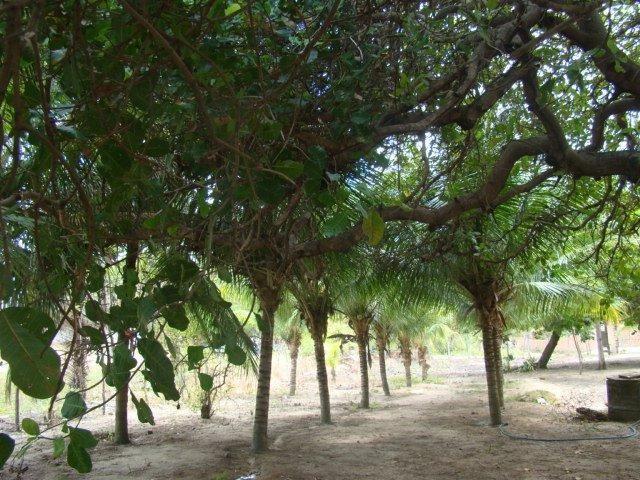 Sítio em Pacatuba, Ceará, Região Metropolitana de Fortaleza - Foto 11
