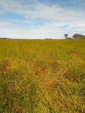 Terra para lavoura 30 km de Campo Grande - Foto 2