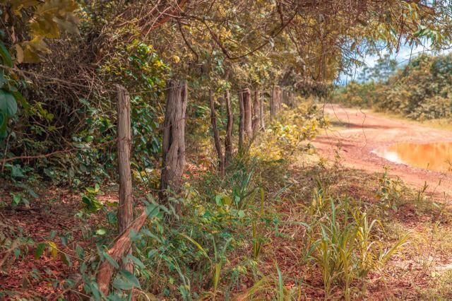 Fazenda para agricultura e pecuária - Foto 7