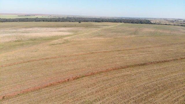fazenda em mirandopolis 265 alqueires 21.200.000 - Foto 3