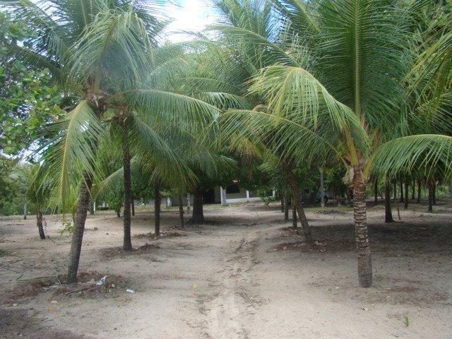 Sítio em Pacatuba, Ceará, Região Metropolitana de Fortaleza - Foto 7