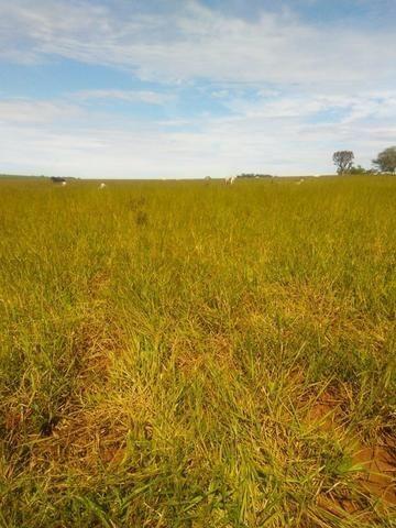 Terra para lavoura 30 km de Campo Grande