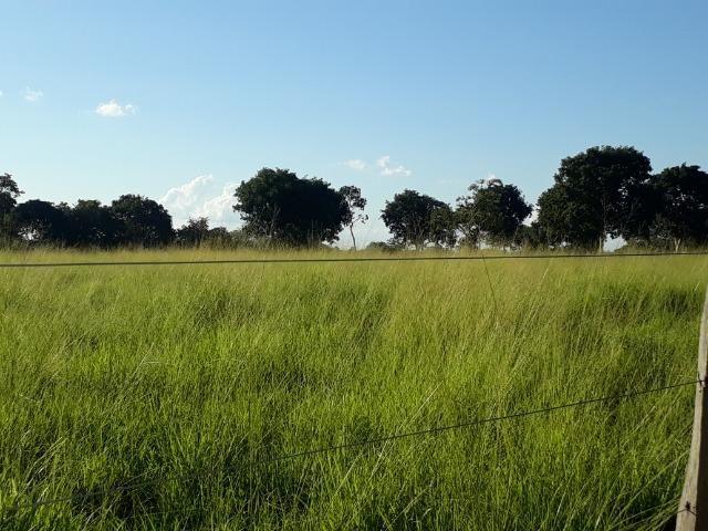 Chácara com caneiros, aves, tanque com peixes na BR 364 ha 30 km de Várzea Grande - Foto 13