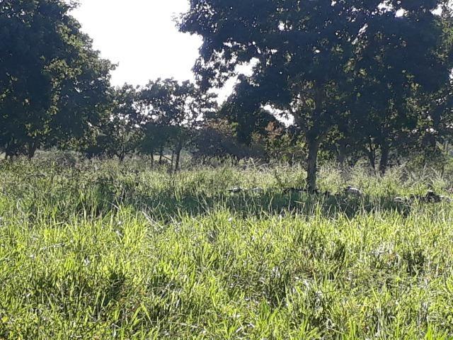 Chácara com caneiros, aves, tanque com peixes na BR 364 ha 30 km de Várzea Grande - Foto 6