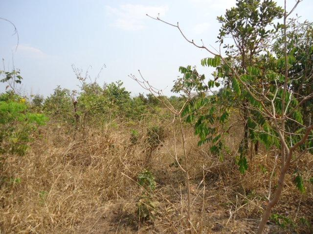 3000 hectares,Paranatinga/MT, 50% Para Plantio Soja, Paranatinga/MT. Oportunidade - Foto 3