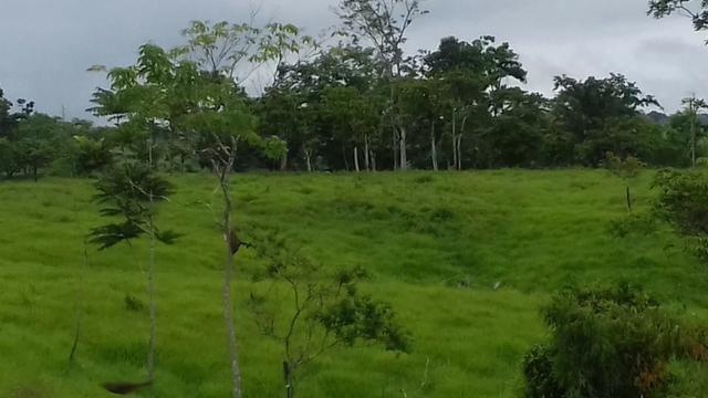 Fazenda em Porto Acre 35 km de Rio Branco - Foto 2