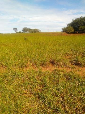 Terra para lavoura 30 km de Campo Grande - Foto 3