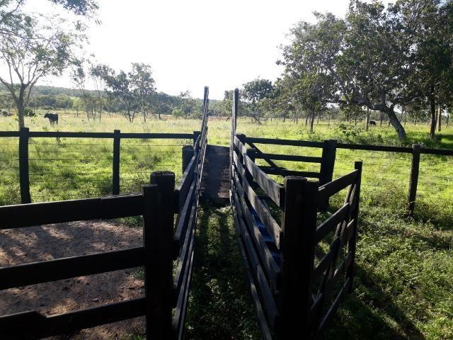 Chácara com caneiros, aves, tanque com peixes na BR 364 ha 30 km de Várzea Grande - Foto 17