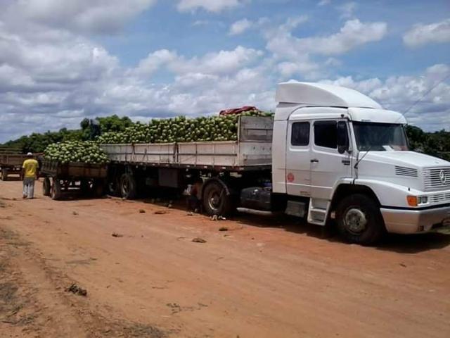 Coco verde carga direto do nordeste - Foto 3