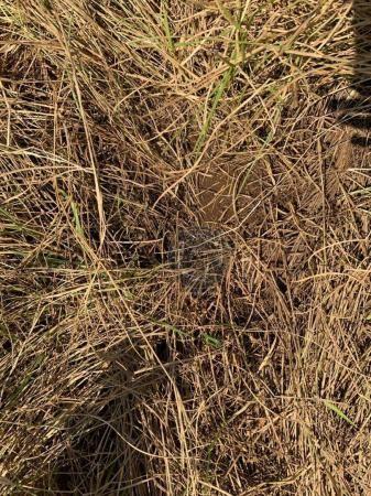 Fazenda 95 ha região chapada dos guimarães - Foto 5