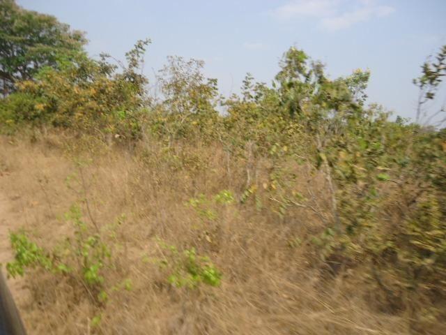 3000 hectares,Paranatinga/MT, 50% Para Plantio Soja, Paranatinga/MT. Oportunidade