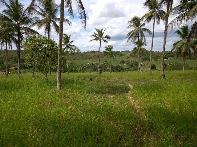 Fazenda alagoinhas arrendamento - Foto 3