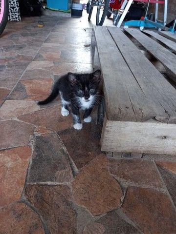 Doação de filhote de gato.