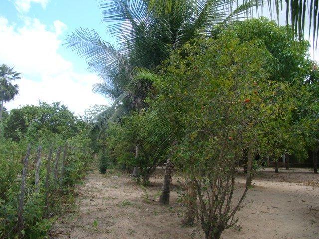 Sítio em Pacatuba, Ceará, Região Metropolitana de Fortaleza - Foto 13