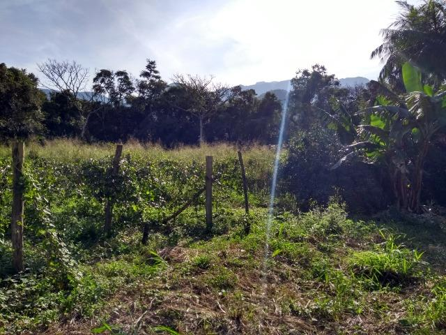 Área com 30 hectares com 600 metros de rio - Foto 17