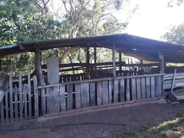 Chácara com caneiros, aves, tanque com peixes na BR 364 ha 30 km de Várzea Grande - Foto 15