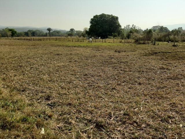 Chácara com 5 hectares na Agrovila das Palmeiras - Foto 3