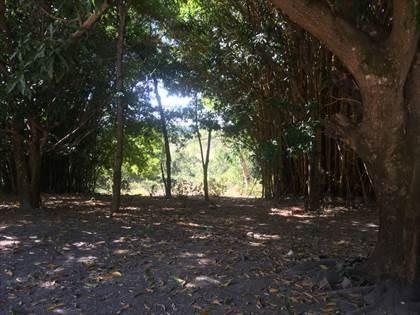 Fazenda à venda, Córrego da Minhoca - Três Marias/MG - Foto 2