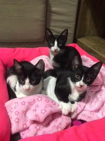 Doa se 4 filhotes de gatinhos - Foto 2