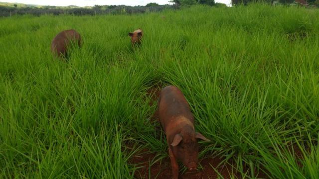 Vila rural em Valinhos , cidade Luiziana - Foto 4