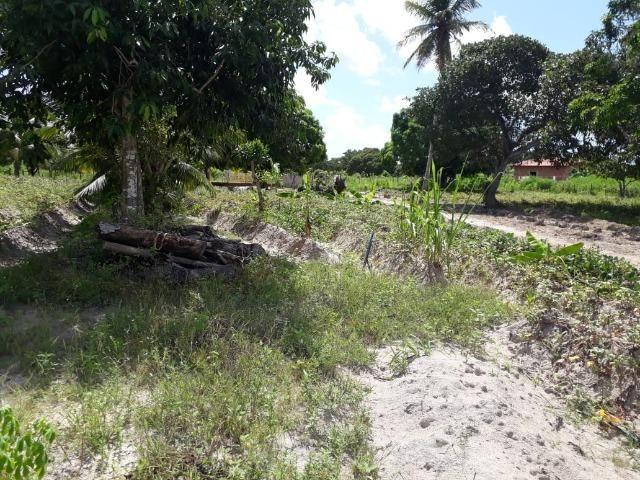 Sítio com 2 hectares - Todo irrigado e produzindo - Foto 14