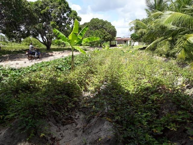 Sítio com 2 hectares - Todo irrigado e produzindo - Foto 8