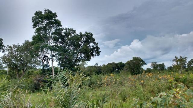 Fazenda 320 ha 100 km de Cuiaba - Foto 7