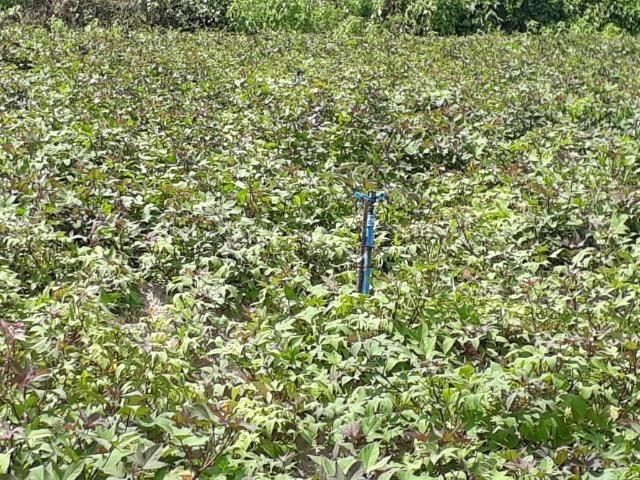 Sítio com 2 hectares - Todo irrigado e produzindo - Foto 18