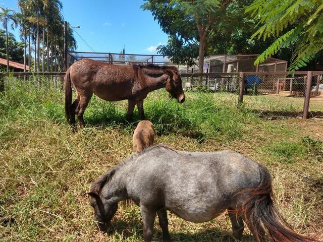 Chácaras em Trindade- Go Monte das Oliveiras / Arca Parque - Foto 9