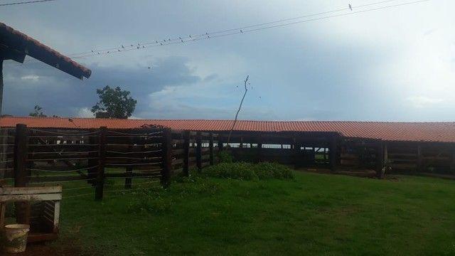 Fazenda dupla aptidão município Ituitataba  - Foto 15