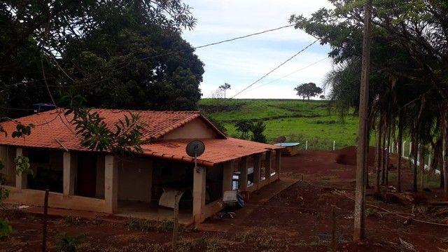 Fazenda dupla aptidão município Ituitataba  - Foto 6