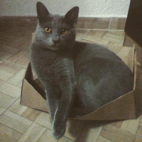 Doa-se Gato! Urgente!!!