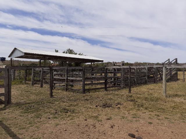 Fazenda 23 Alqueires, Formada, Plana, Terra Cultura, 1,2 Asfalto-Goiánésia - Foto 15