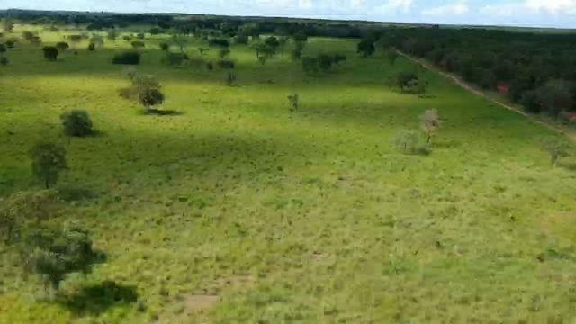 Fazenda em livramento/MT 512 hectares sendo 400 formado, 100% escriturada - Foto 5