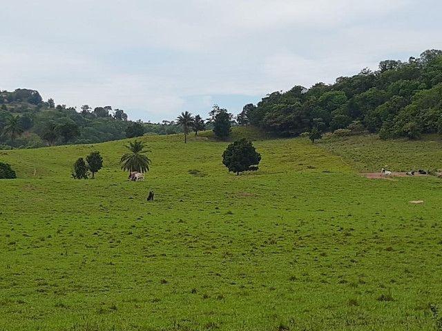 Fazenda a venda em Candeias. A 50km de Salvador - Foto 8