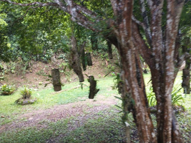 Sitio martide 2 alqueires - Foto 11