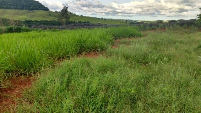 Vila rural em Valinhos , cidade Luiziana - Foto 10
